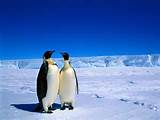 soul mates penguins